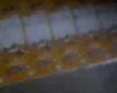 Video-0003